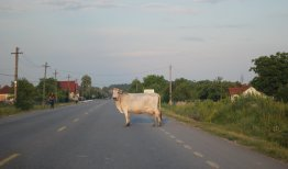 mała niespodziewanka na drodze w Rumunii... little surprise on Romanian road...