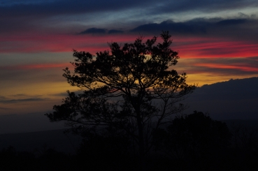 A tree and a twilight