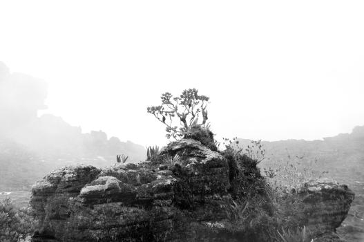 Roraima_Tepui-54