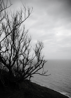 a tree and a cliff