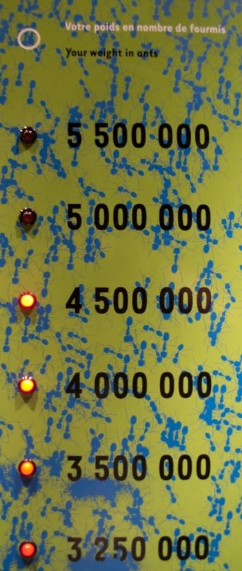a ty ile mrówek ważysz?