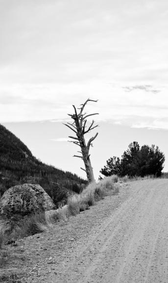 martwe drzewo / a dead tree