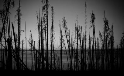 scena z drzewami 01