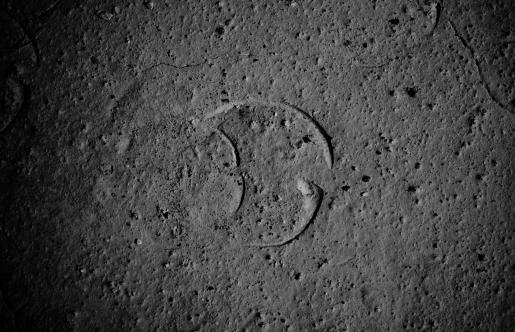 bison footprints / ślady bizona