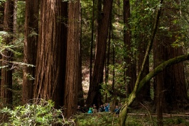 Sequoias and The People