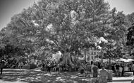 Olvera Street Market - a tree of life / drzewo życia