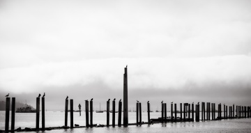 a scene with resting birds and dock piles
