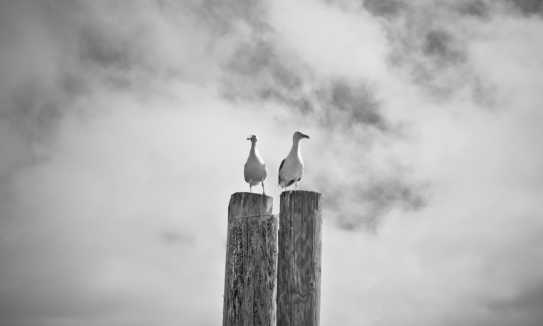 two sullen seagulls