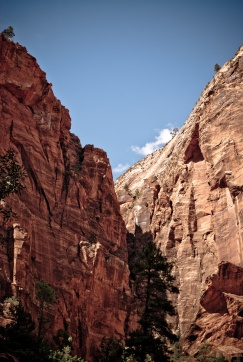 Zion_National_Park_21