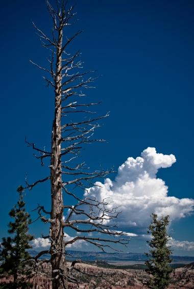 Bryce Canyon - 34