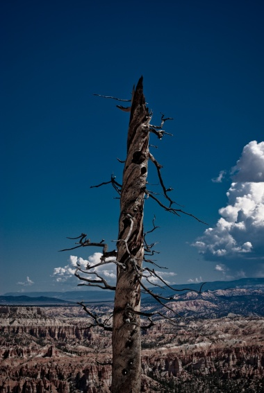 Bryce Canyon - 35