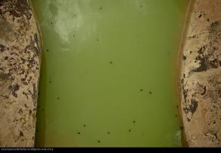 happy tadpoles