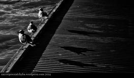 Key West - 01 - Seaguls