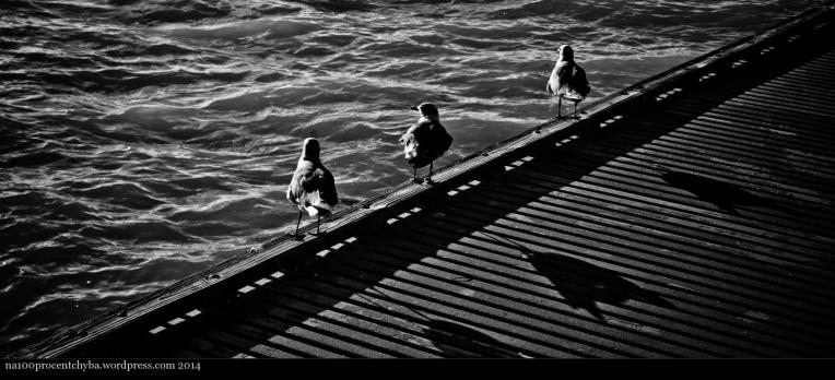 Key West - 08 - The 3 Shadows