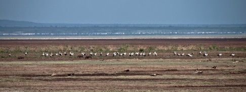 Tanzania-Lake_Manyara_National_Park-002-DSC_4920