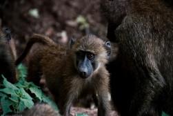 Tanzania-Lake_Manyara_National_Park-005-DSC_5047