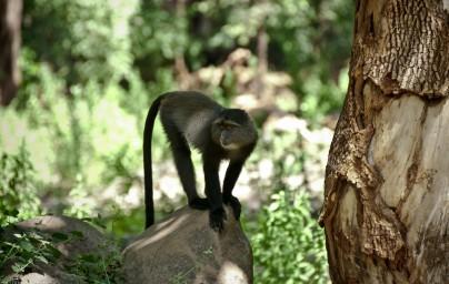 Tanzania-Lake_Manyara_National_Park-007-DSC_4907