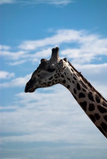 Tanzania-Lake_Manyara_National_Park-008-DSC_5015