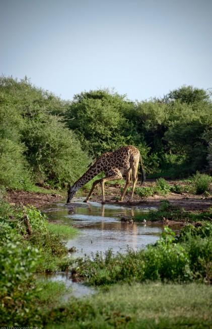 Tanzania-Lake_Manyara_National_Park-009-DSC_5034