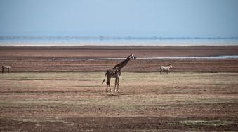 Tanzania-Lake_Manyara_National_Park-011-DSC_4919