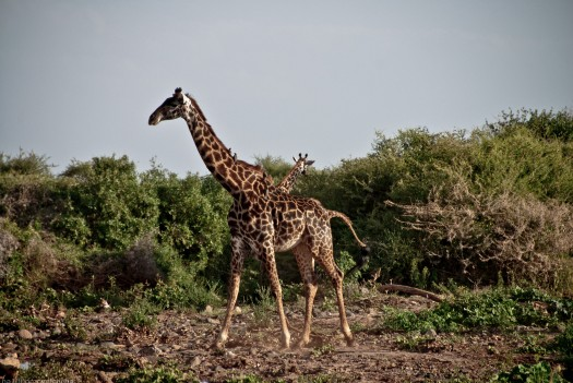 Tanzania-Lake_Manyara_National_Park-013-DSC_5005