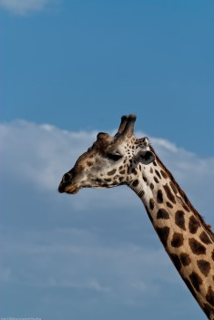 Tanzania-Lake_Manyara_National_Park-014-DSC_5024