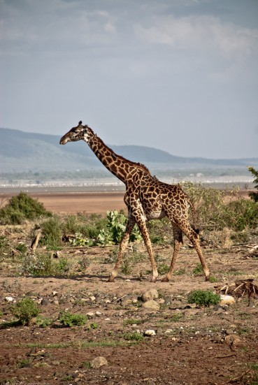 Tanzania-Lake_Manyara_National_Park-015-DSC_5008