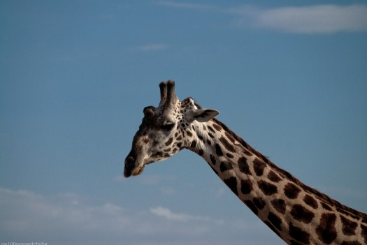 Tanzania-Lake_Manyara_National_Park-017-DSC_5020