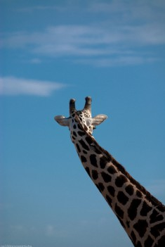 Tanzania-Lake_Manyara_National_Park-018-DSC_5018