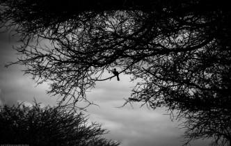 Tanzania-Lake_Manyara_National_Park-019-DSC_4912