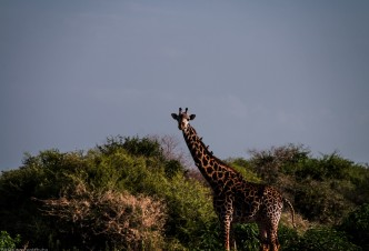 Tanzania-Lake_Manyara_National_Park-020-DSC_5011