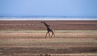 Tanzania-Lake_Manyara_National_Park-021-DSC_4952