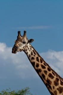 Tanzania-Lake_Manyara_National_Park-024-DSC_5023