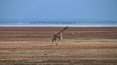 Tanzania-Lake_Manyara_National_Park-026-DSC_4957