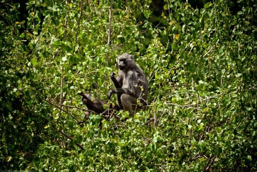 Tanzania-Lake_Manyara_National_Park-028-DSC_4902