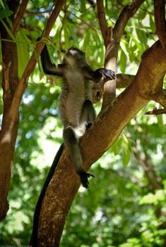 Tanzania-Lake_Manyara_National_Park-031-DSC_4911