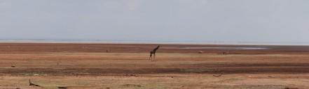 Tanzania-Lake_Manyara_National_Park-Panorama-1-DSC_4925_DSC_4933-9_images