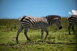 Tanzania-Ngorogoro_Conservation_Area-004-DSC_5111