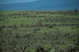 Tanzania-Ngorogoro_Conservation_Area-007-DSC_5128