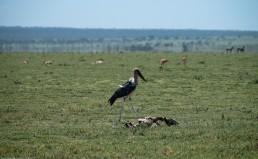 Tanzania-Ngorogoro_Conservation_Area-008-DSC_5129
