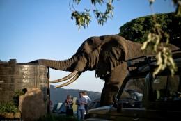 Tanzania-Ngorogoro_Conservation_Area-025-DSC_5961