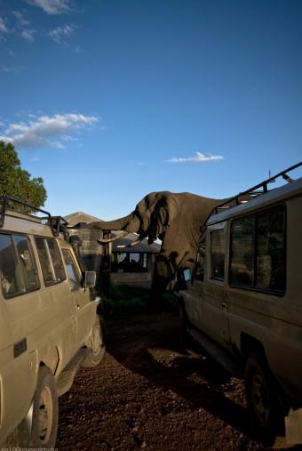 Tanzania-Ngorogoro_Conservation_Area-026-DSC_5963