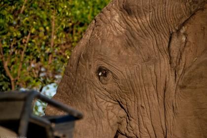 Tanzania-Ngorogoro_Conservation_Area-027-DSC_5964