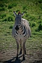 Tanzania-Ngorogoro_Conservation_Area-033-DSC_6021