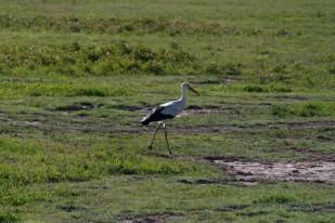 Tanzania-Ngorogoro_Conservation_Area-034-DSC_6024