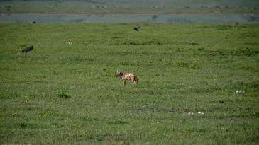 Tanzania-Ngorogoro_Conservation_Area-035-DSC_6026