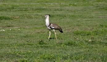 Tanzania-Ngorogoro_Conservation_Area-037-DSC_6037