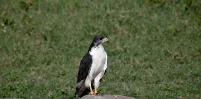 Tanzania-Ngorogoro_Conservation_Area-038-DSC_6041