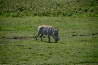 Tanzania-Ngorogoro_Conservation_Area-039-DSC_6044