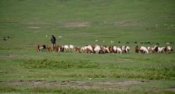Tanzania-Ngorogoro_Conservation_Area-041-DSC_6048